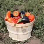 aubergines tomates